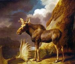 Älg 1773 av George Stubbs (1724–1806). En del konstnärer hade endast en älghornstrofé och en häst till sin hjälp för att lyckas måla detta ovanliga djur.